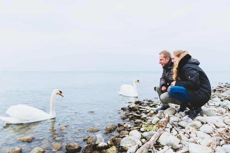 Bodensee Schwan Paar