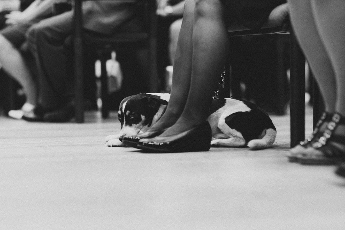 hund im standesamt