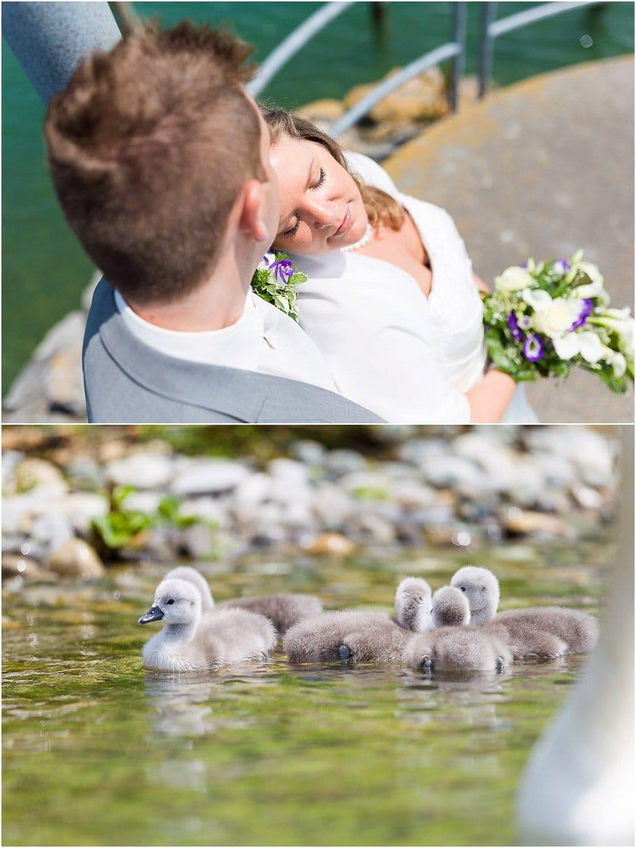 Hochzeit schwan