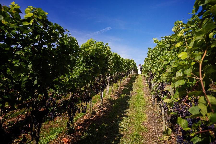 In den Weinbergern der Schweiz