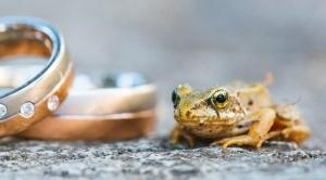 Hochzeit Frosch
