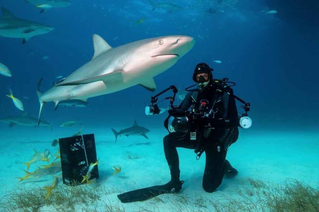 unterwasserfotograf-hai-bahamas