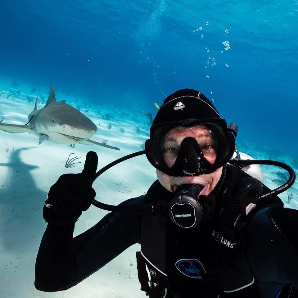 unterwasser-hai-bahamas-shark